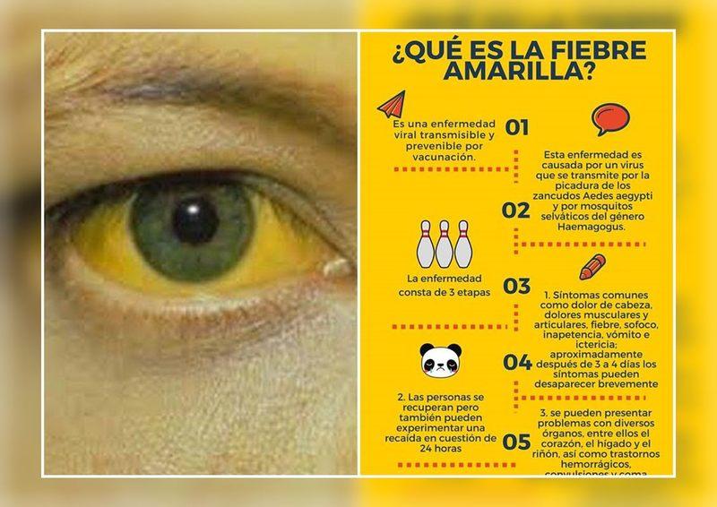 como se contagia la fiebre amarilla de persona a persona